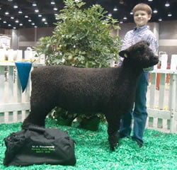 Colored Romney at NAILE