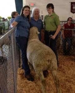 Three generations of Romney breeders