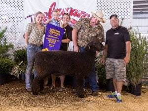 Post image for DE State Fair Supreme Champion Wool Ram