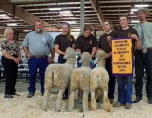 Post image for Northeast Youth Sheep Show (NEYSS) 2014
