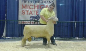 Katie Hacker, Champion White Ram