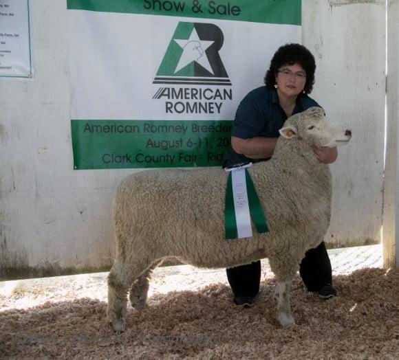 Champion Ewe