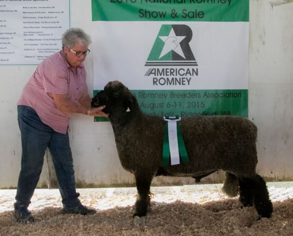 Champion Natural Colored Romney Ram