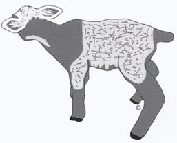 Patterns in sheep – the Agouti locus