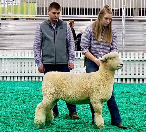American Romney Breeders Association